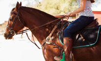 Morcom Performance Horses: Horseback Riding Lessons