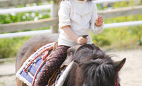 Rocking T Ranch: Horseback Riding Lessons