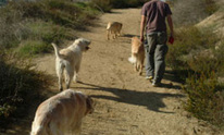 Happy Tails: Dog Walking