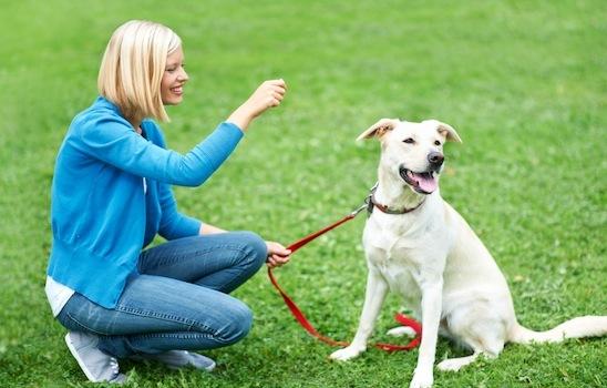 Dog_training_16