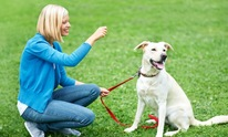Park Cities Errand and Maid Services: Dog Training