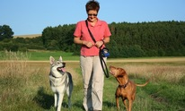 Jornada Setters: Dog Training