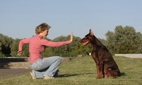 P's and Q's Dog Training: Dog Training