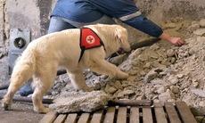 Dog training 12