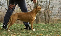 Athens Dog Training LLC: Dog Training
