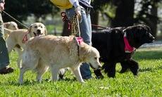 Dog_training_9
