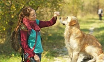 Personal Dog Training: Dog Training
