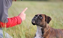 Healthy Paws Pet Specialists: Dog Training