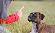 Dog_training_18
