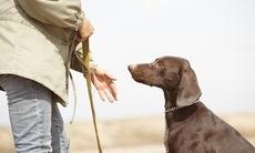 Dog_training_20