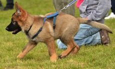 Dog_training_15