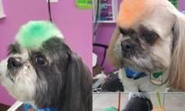 Anastasia Dog Grooming: Dog Grooming