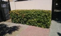 BNB Landscapes: Lawn Mowing