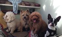 DOG WALKER WOOF WOOF: Pet Sitting