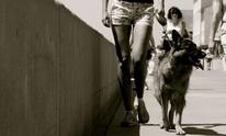 PetsDigThis: Dog Walking