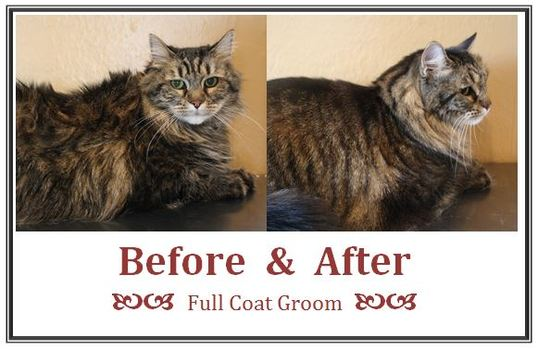 Before_after_full_coat_groom