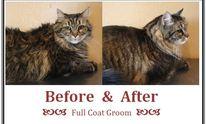 One White Whisker: Cat Grooming
