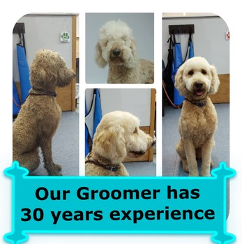 Baileys bath house bellingham wa dog grooming book online solutioingenieria Images