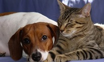 All Health Pet Care PC: Pet Sitting