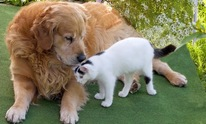Petagree Pet Center: Pet Sitting