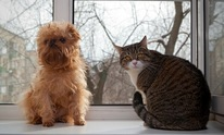 Sitting Pretty Pet Care: Pet Sitting