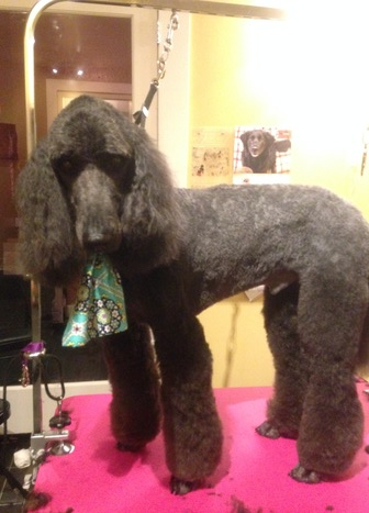 Stylin hounds spa boutique seattle wa dog grooming book online solutioingenieria Image collections