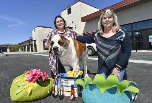 Thats fetch santa maria ca dog grooming book online santa maria ca dog grooming book online solutioingenieria Gallery