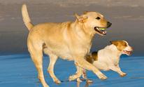 Big Sky Dogs: Dog Walking