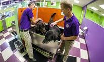 TEST - Wag N' Wash: Dog Grooming