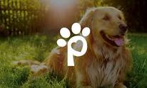 Test - Petsense Sandbox: Dog Grooming