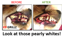 Test - K9 GRILLZ Sandbox: Dog Grooming