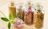 Yang Health Center, Chinese Acupuncture: Naturopathic Medicine