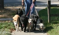 iSit And iWalk Pet Services: Dog Walking