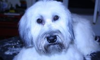 Canine Cuts: Dog Grooming