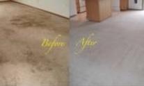 Divine Quality Carpet Care: Carpet Cleaning