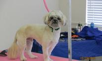 Grooming Tales Salon: Dog Grooming