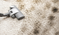 Spotless, LLC: Carpet Cleaning