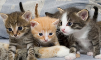 Carriage Hills Animal Hospital & Pet Resort: Cat Grooming