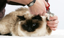 Animal Barn: Cat Grooming
