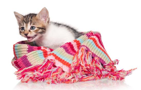 Cat_grooming_h