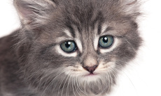 Cat_grooming_j