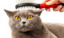 Paws of Purrfection: Cat Grooming