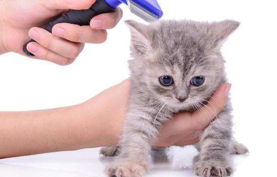 Cat_grooming_p