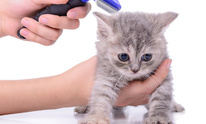 Piper's Playhouse: Cat Grooming
