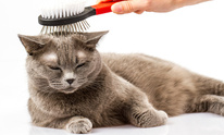 Garden Gate Inn For Pets At The Veterinary Medical Center: Cat Grooming