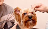 Loxley Animal Hospital: Dog Grooming