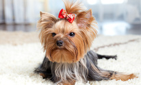 Miss Johnnie's Dog Grooming: Dog Grooming