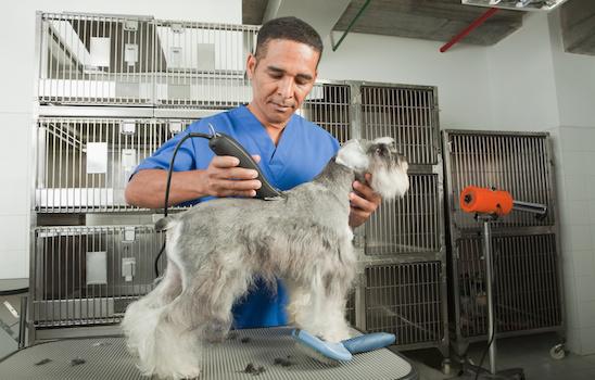 Dog_grooming_c