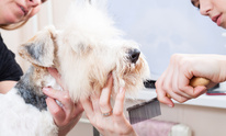 Paws in the Sand: Dog Grooming