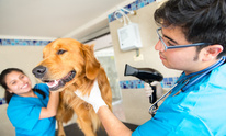 Healthy Spot: Dog Grooming